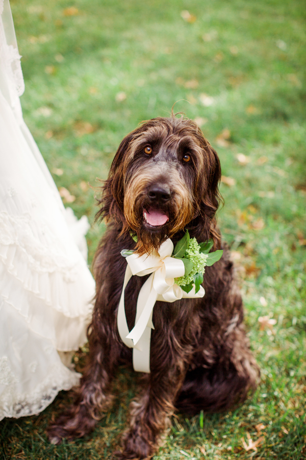 labradoodle-wedding